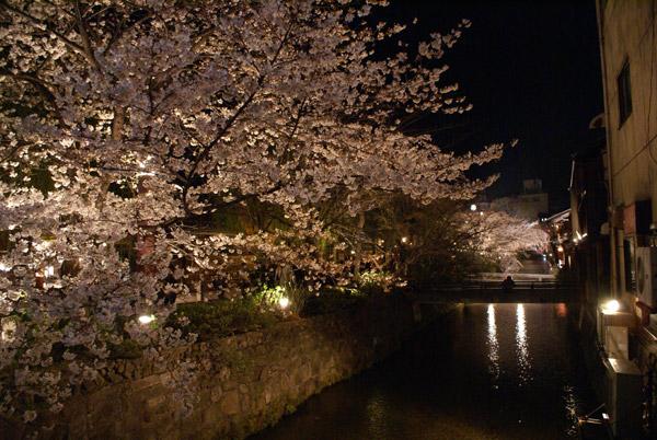 祇園 夜桜.jpg