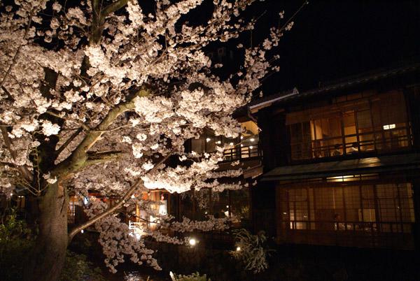 祇園 夜桜 (1).jpg