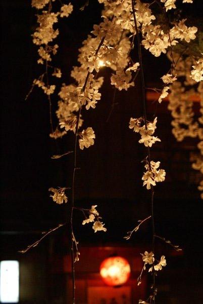 祇園 夜桜 (2).jpg