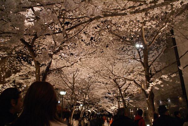 祇園 夜桜 (4).jpg