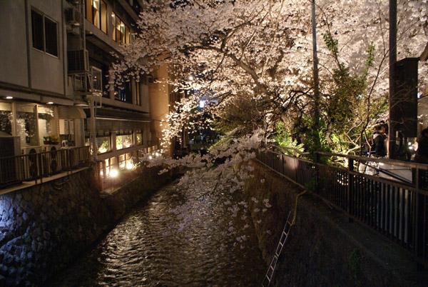 祇園 夜桜 (6).jpg
